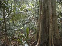 Malaysian forest - archive picture