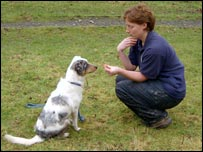 Bbc News Uk England Devon Deaf Collie Hopes For Thumbs Up