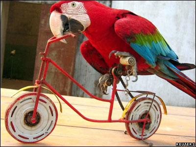 """Если у вас есть попугай, и вы не учите его фразе  """"помогите! они превратили меня в попугая! """" вы попусту тратите свое..."""