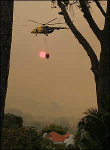 Helicopter flying behind trees [Steve Bailey]