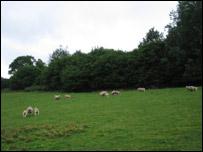 Vegetación en Kent.