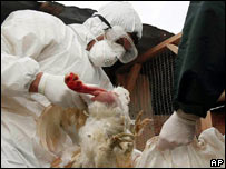 Scientist testing for bird flu