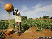 A Niger woman husks millet