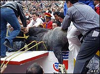 People at a Mexican bullfighting ring try to stop a bull after it jumped into the stands