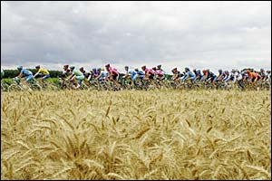 The riders pass through a corn field