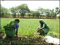 Farm cooperative in Gujarat state