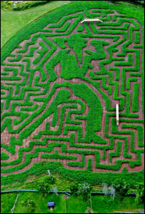 An aerial view of the Tom Jones maze