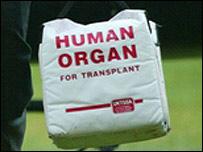 Organ transplant bag