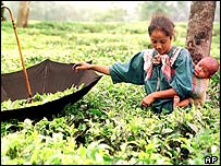 India tea worker in West Bengal