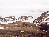 Greenland (library)