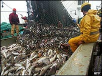 French cod-fishing trawler