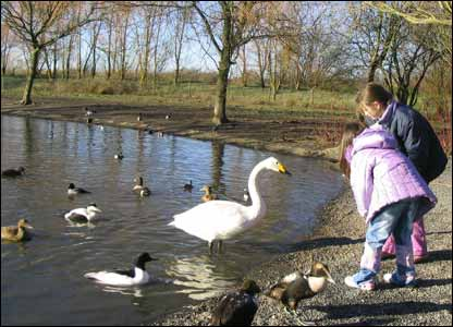 Diane and David Howard-Willis of Pontarddulais took their grandchildren Rhian and Rachel Jeffreys to feed the swans and ducks near Llanelli