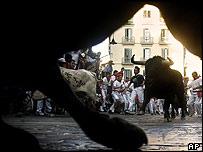Pamplona bulls