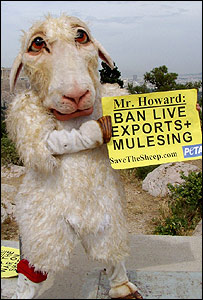 A PETA supporter protesting while dressed up as a sheep in Athens during a visit to Greece by Australian Prime Minister John Howard