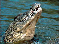 Crocodile in Africa