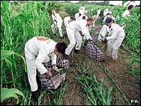 Protesters attack GM crops at Lyng, UK