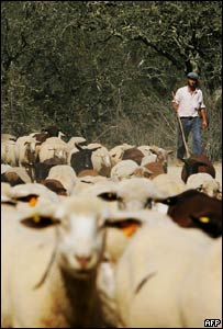 A farmer and his sheeps near Nossa Senhora da Cola, Alentejo, 300km south of Lisbon
