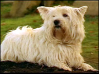 The dog in that plays Bobby is a West Highland terrier