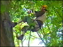 Picture of competitor in Cardiff tree-climbing contest
