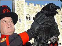 Ravenmaster Derrick Coyle with raven