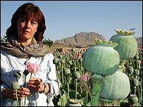 Jane Corbin in a field of opium poppies in Afghanistan