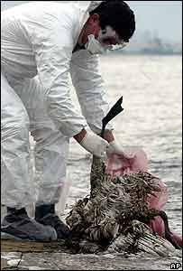 A health official collects a dead swan in northern Greece