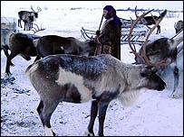Nenets with reindeer