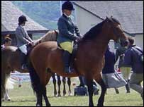 Horses in competition on the final day