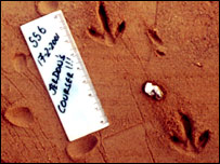 A Jerdon's courser's footprint (P.Jeganathan)