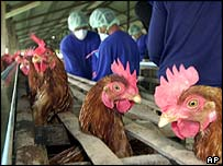 Poultry worker takes precautions