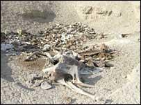 Bones of dead animals in Somali (Copyright: Oxfam)