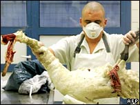 A dead swan is examined in a German lab.  Image: AFP/Getty