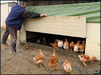 A French chicken farmer