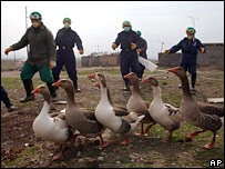 Iraqi health workers collect geese from a local village
