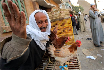 دجاج بلا حدود _41349824_...birds416