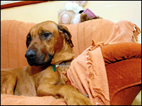 Levi the dog on his sofa