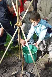Niños belgas plantan un árbol caqui de semillas del árbol que sobrevivió en Nagasaki  (gentileza: Proyecto Árbol Caqui)