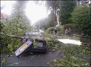 Tree on a car in Birmingham - Picture: Kevin White