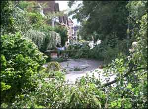 Two trees block a Moseley street - Picture: Jonathan Hill