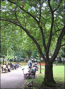 Cerezo en recuerdo de las víctimas de Hiroshima en Tavistock Square, Londres