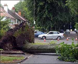 Uprooted trees littered the streets of Moseley