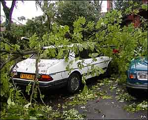 Cars were crushed by falling trees