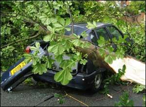 A tree fallen on a car