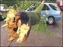 Car with fallen tree on it