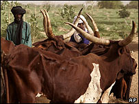 Nomad farmers stand among their cattle