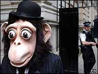 Well-dressed monkey protester