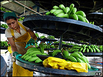 Costa Rican banana worker