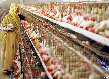 A poultry farm in Amritsar, India