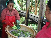 Woman cleaning bananas in St Lucia