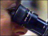 Una persona mira por un microscopio.